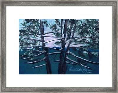 Hemlocks Snowy Morning Framed Print by Bernadette Kazmarski