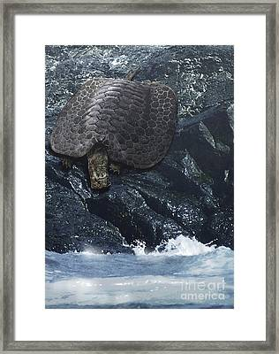 Henodus Turtle At The Waters Edge Framed Print by Jan Sovak