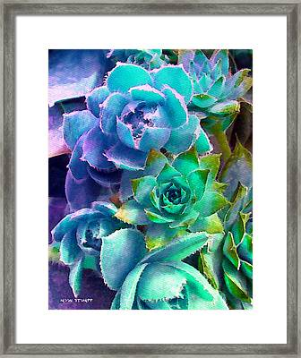 Hens And Chicks Series - Deck Blues Framed Print by Moon Stumpp