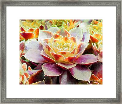 Hens And Chicks Series - Early Morning Quite Framed Print by Moon Stumpp