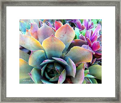 Hens And Chicks Series - Unfolding Framed Print by Moon Stumpp