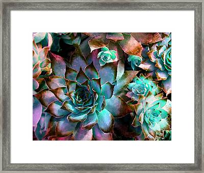 Hens And Chicks Series - Verdigris Framed Print by Moon Stumpp
