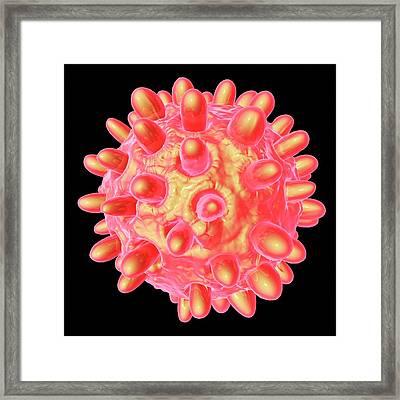 Hepatitis B Framed Print by Mehau Kulyk
