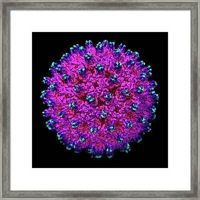 Hepatitis B Virus Framed Print by Louise Hughes
