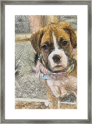 Her Name Is Lola Framed Print by Trish Tritz
