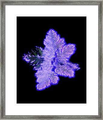 Herb Leaves Framed Print by Robin Noorda