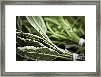Herbs Framed Print by Elena Elisseeva