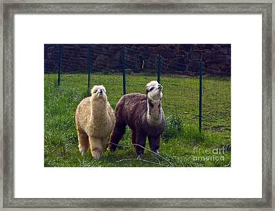 Here Comes Royalty Framed Print by Byron Varvarigos