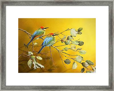 Here Comes The Sun - Rainbow Bee-eaters Framed Print by Frances McMahon