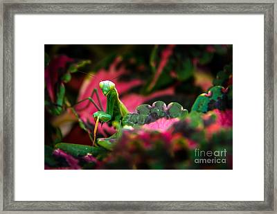 Here I Am Framed Print by Robert Bales