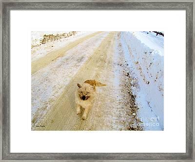 Here I Come Framed Print by Ramona Matei