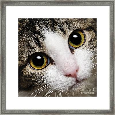 Here Kitty Kitty Close Up Framed Print by Andee Design