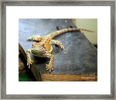 Here Lizard Lizard Framed Print by Andee Design