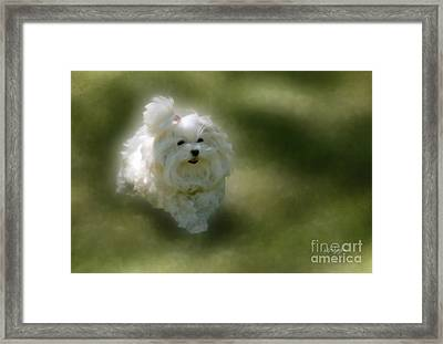 Here She Comes Framed Print by Lois Bryan