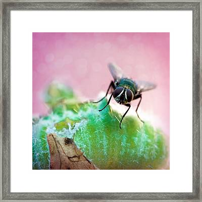 Here's Looking At You Framed Print by Jon Woodhams