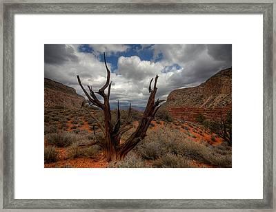 Hermit Trail Framed Print by Kiril Kirkov