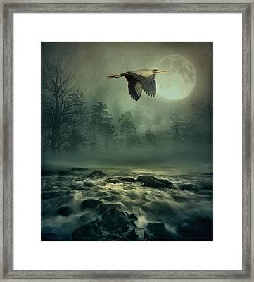 Heron By Moonlight Framed Print by Andrea Kollo