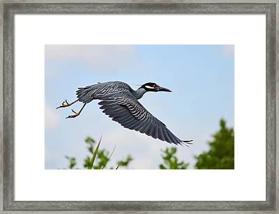 Heron Flight Framed Print by Laura Fasulo