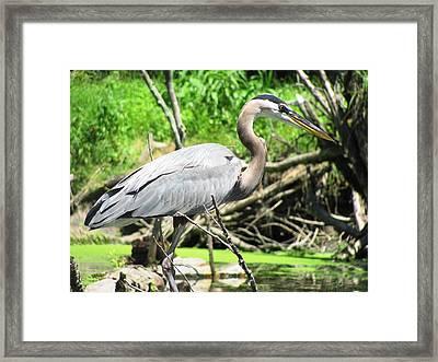 Heron Framed Print by LJAS Cunnea