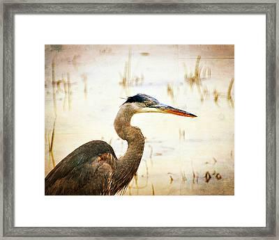 Heron Framed Print by Marty Koch