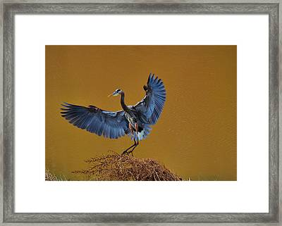Heron With Wings Out - 9235 Framed Print by Paul Lyndon Phillips