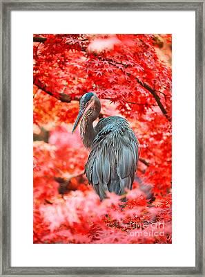 Heron Wonderland Framed Print by Douglas Barnard