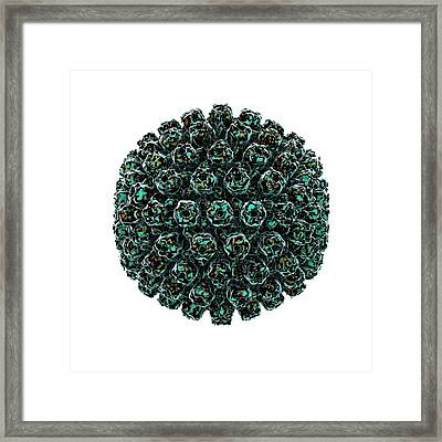 Herpes Simplex Type 1 Virus Framed Print by Animate4.com/science Photo Libary