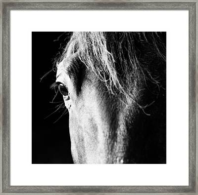 He's Seen It All... Framed Print by Shelby  Young