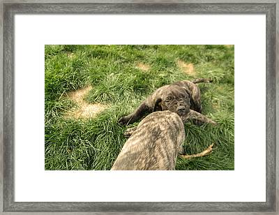 Hey You Come Back Here Buddy Framed Print by Jeff Swan