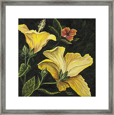 Hibiscus 2 Framed Print by Darice Machel McGuire