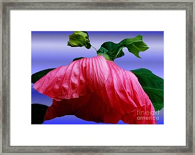 Hibiscus Bloom Wilted Framed Print by ImagesAsArt Photos And Graphics