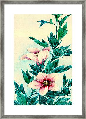 Hibiscus Flowers 1870 Framed Print by Padre Art