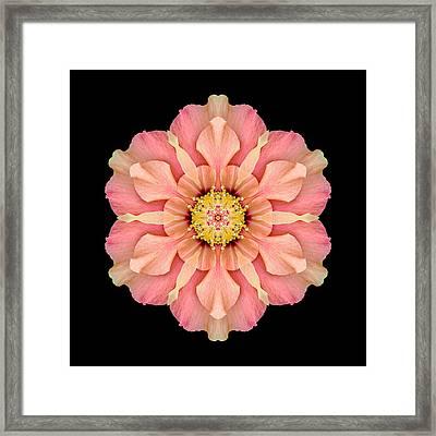 Hibiscus Rosa-sinensis I Flower Mandala Framed Print by David J Bookbinder