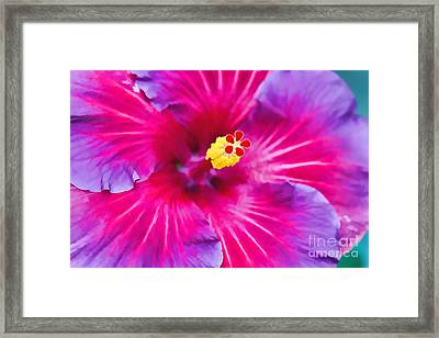 Hibiscus Watercolor Framed Print by Terry Weaver