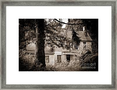 Hidden Behind The Pines Framed Print by Colleen Kammerer