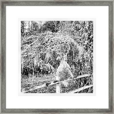 Hidden In Time Framed Print by Chasity Johnson