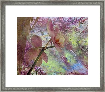 Hidden Orchid Framed Print by Donna Walsh