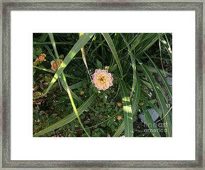 Hidden Perfection Framed Print by Jacquelyn Roberts