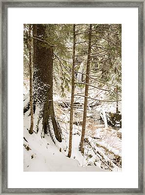 Hiding In The Trees Framed Print by Tim Grams