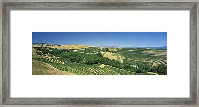 High Angle View Of A Vineyard, Carneros Framed Print by Panoramic Images