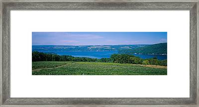 High Angle View Of A Vineyard Framed Print by Panoramic Images