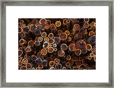 High Angle View Of Cut Tree Trunks Framed Print by Mike Raabe