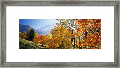 High Angle View Of Trees In A Forest Framed Print by Panoramic Images