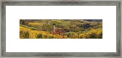High Angle View Of Vineyards, Alba Framed Print by Panoramic Images