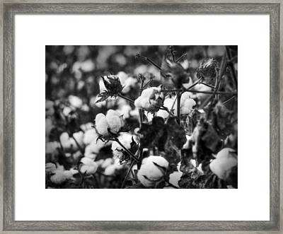 High Cotton 001 Bw Framed Print by Lance Vaughn
