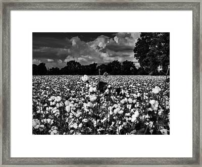 High Cotton 002 Bw Framed Print by Lance Vaughn