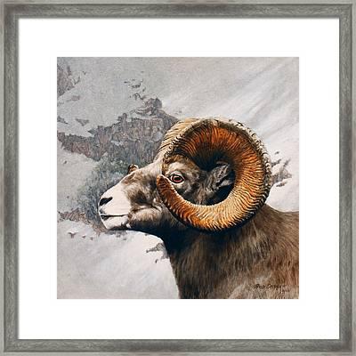 High Country Bighorn Framed Print by Rob Dreyer AFC