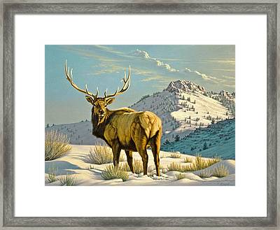 High Country Bull Framed Print by Paul Krapf