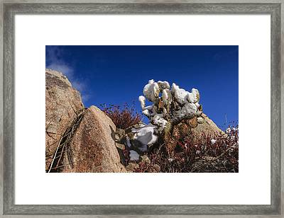 High Desert Snow 2 Framed Print by Scott Campbell
