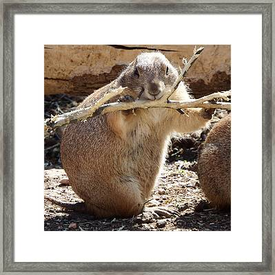 High Fiber Diet Framed Print by David G Paul